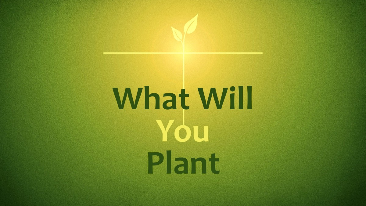 What Will YouPlant?