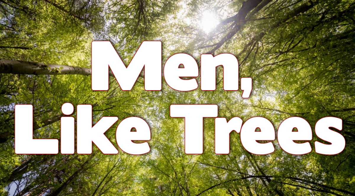 Men, Like Trees
