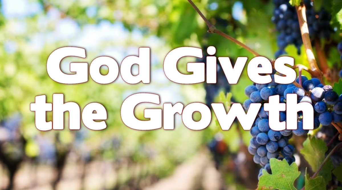 God Gives the Growth