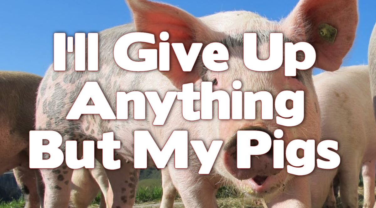 I'll Give Up Anything…But My Pigs