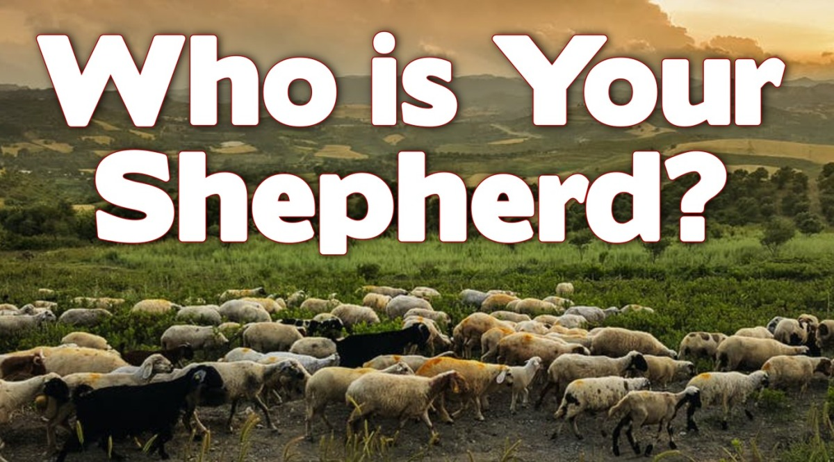 Who Is YourShepherd?
